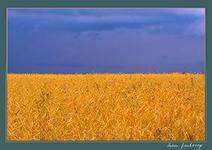 География для детей Флаг Украины